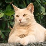 Минстрой утвердил размеры подвальных окон в домах для доступа животных